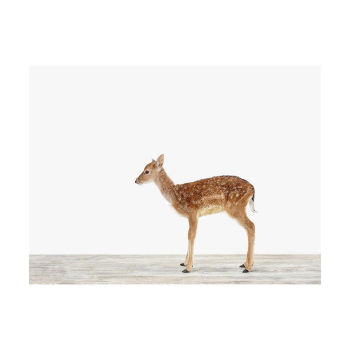 Bayi Deer No. 2 by Sharon Montrose