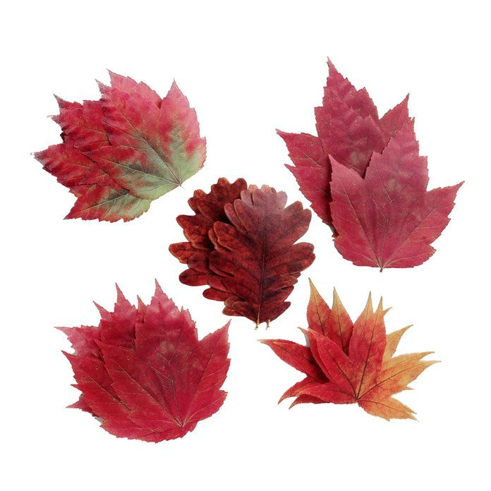 Perchment Paper Fall Leaves