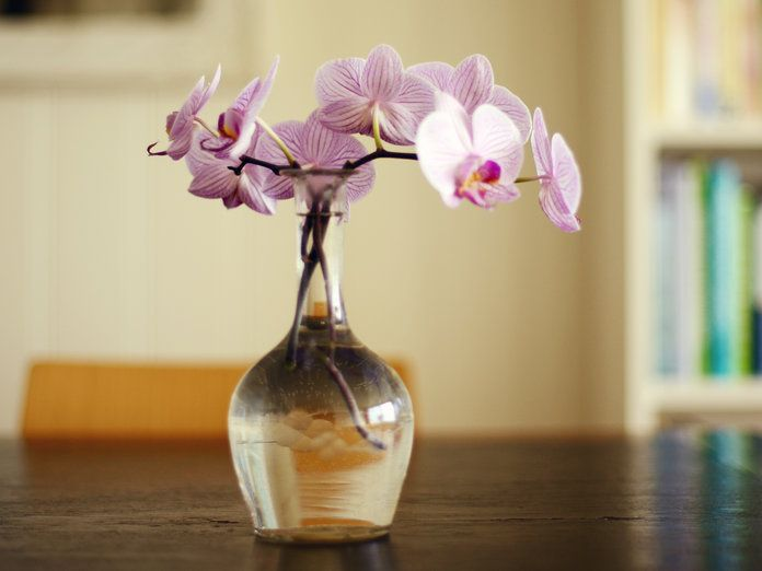 Anti Gift Guide - Orchid - Embed